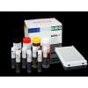 Estradiol Sensitive DRG
